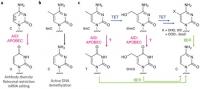 APOBEC for DNA methylation analysis