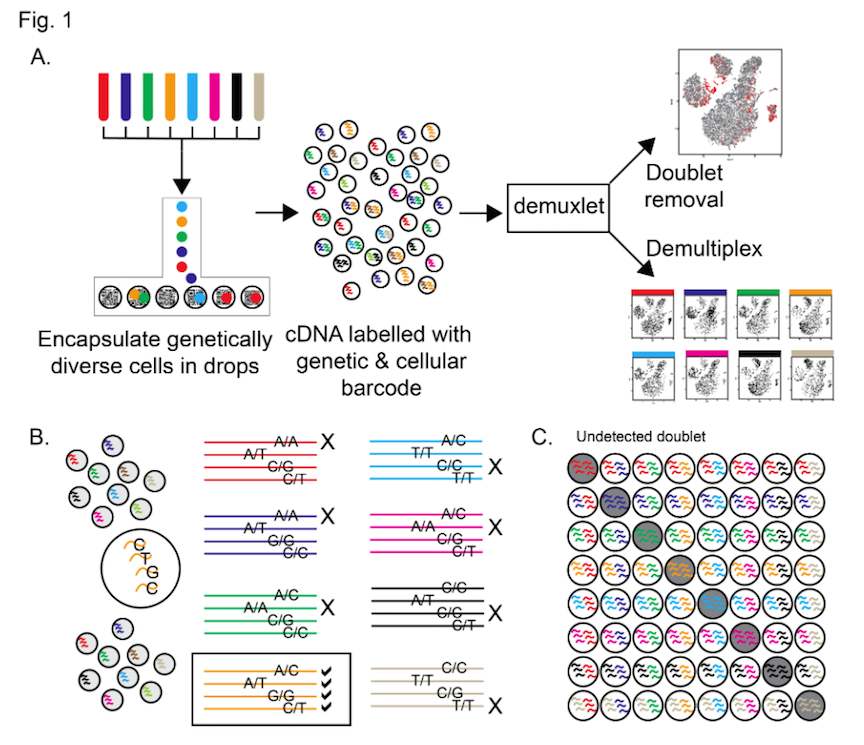 Single Cell Rna Sequencing Scrna Seq Of Cells: 10X Genomics 10x Cheaper...and Better Too!