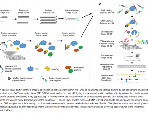 DAP-Seq for higher-throughput transcription factor analysis
