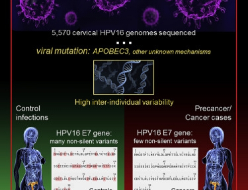 WGS of HPV reveals the finer details of HPV genetic variation