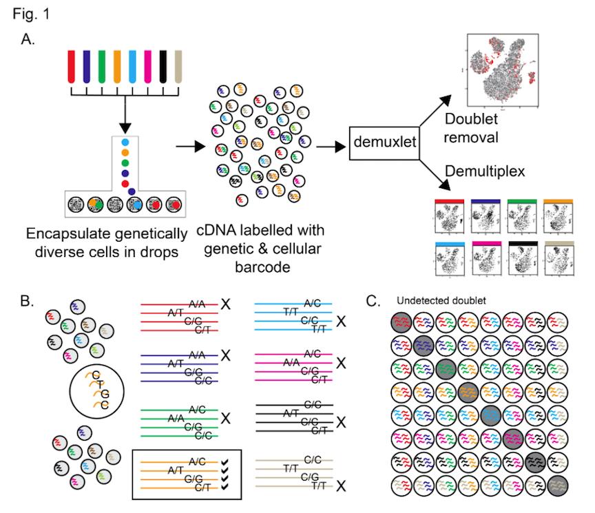 10X Genomics 10x cheaper…and better too!