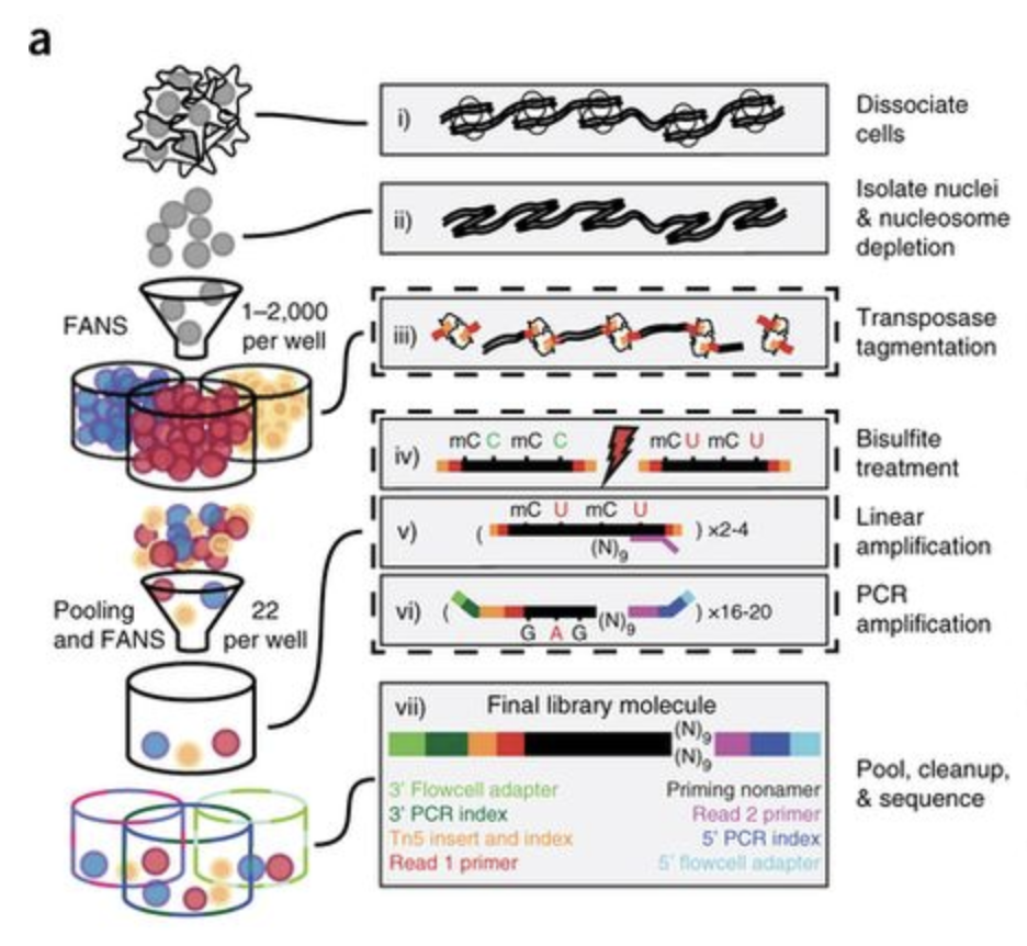 Single-cell indexing for methylation analysis (sci-MET)