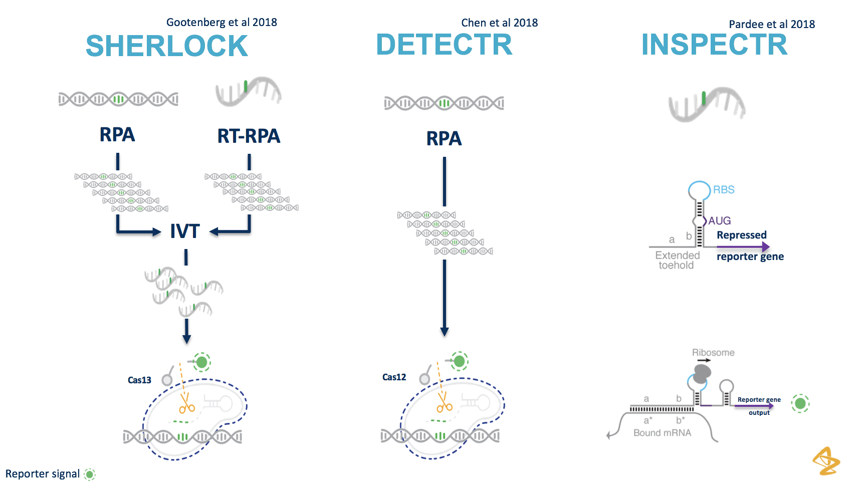 #CRISPR Diagnostics part 2